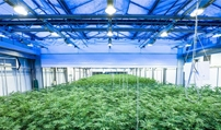 Grow Industry